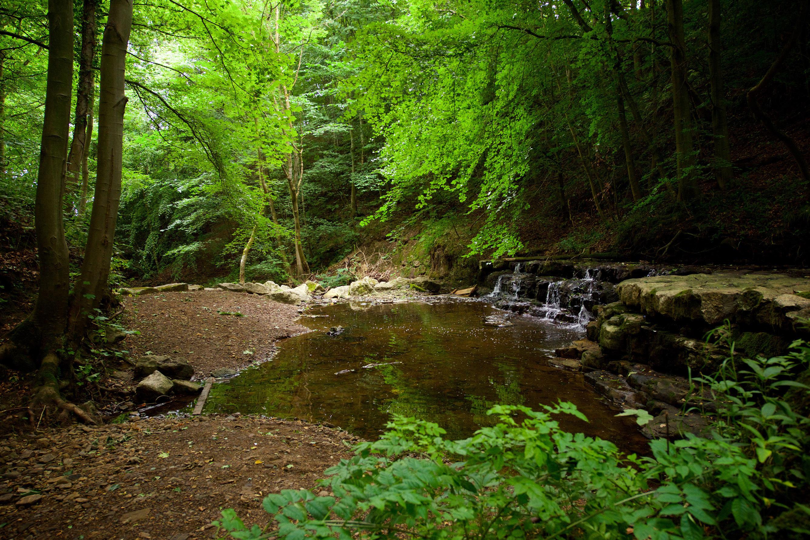 Witton Castle Country Park  Durham  Uk Dl14 0de